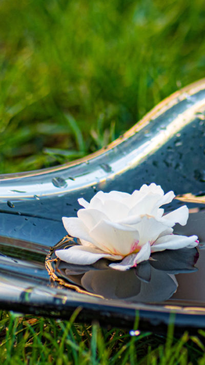 Beseelte Momente - Freie Rituale, Schale mit Blüte